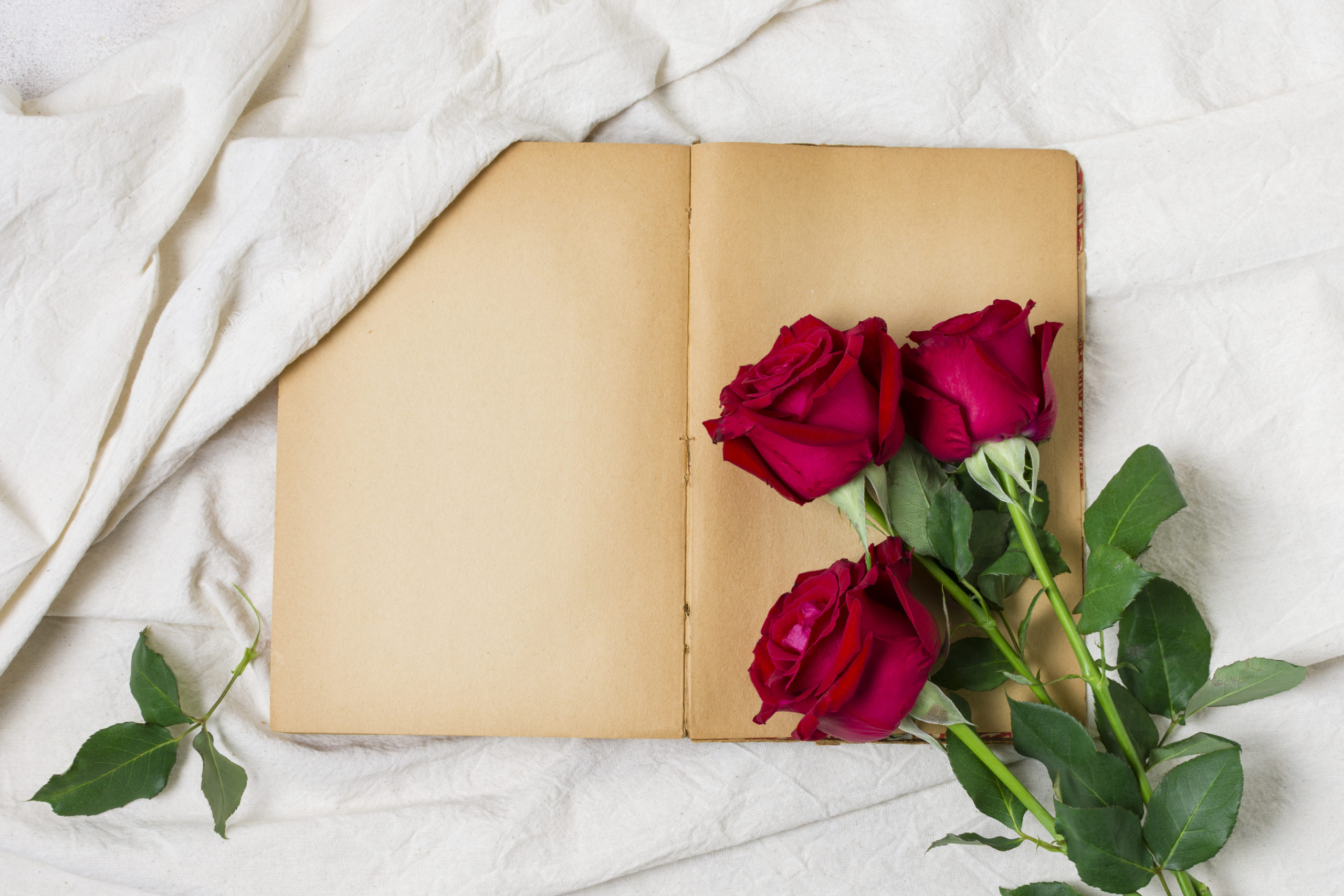 red roses on an open old book